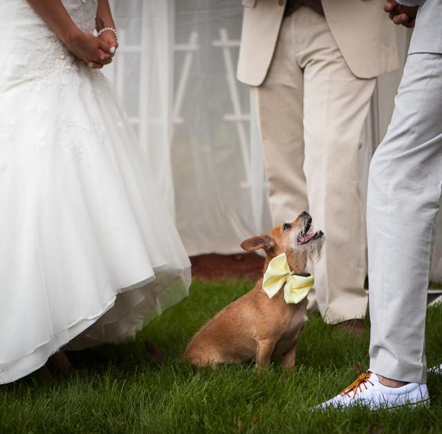 Wedding: Cydny & Marc (Paterson NJ, Backyard and Art Factory)